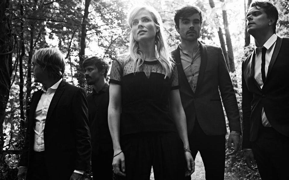 The Common Linnets. Photo : Facebook